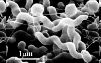 Campylobacter fertőzések